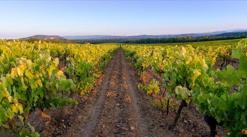 Wijngaard van de AIX Rosé 2019 wijn